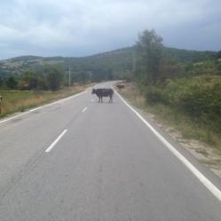 Road block.